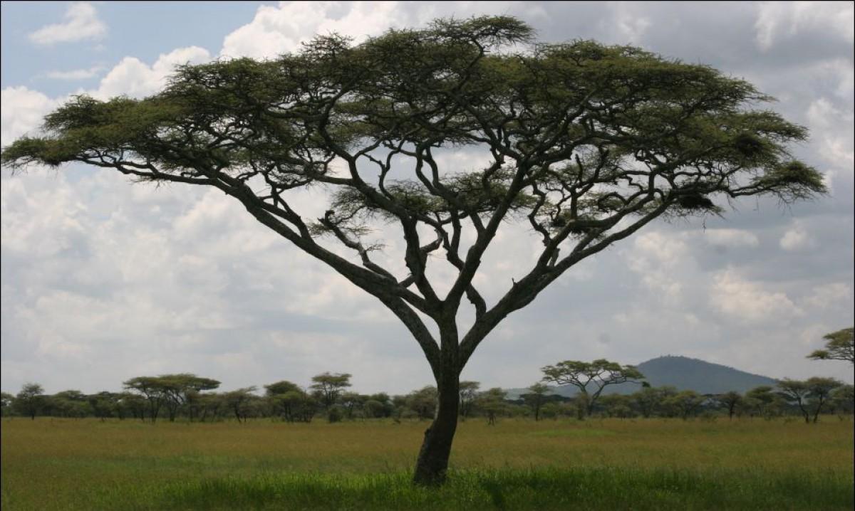 EDEN in Africa