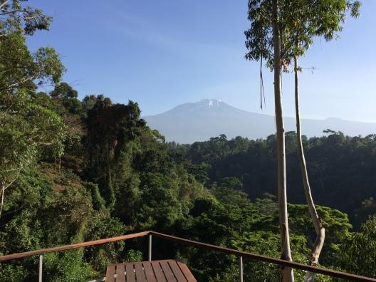 kilimanjaro-morning