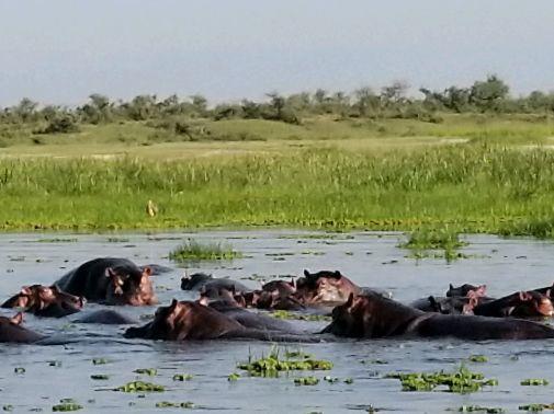Hippo Breakfast